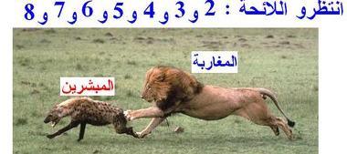 marokkansk løve på jakt etter kristne