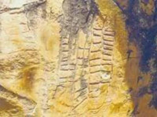 Petroglyphs Azru n Tamart, Taqbaylit (Kabylia)